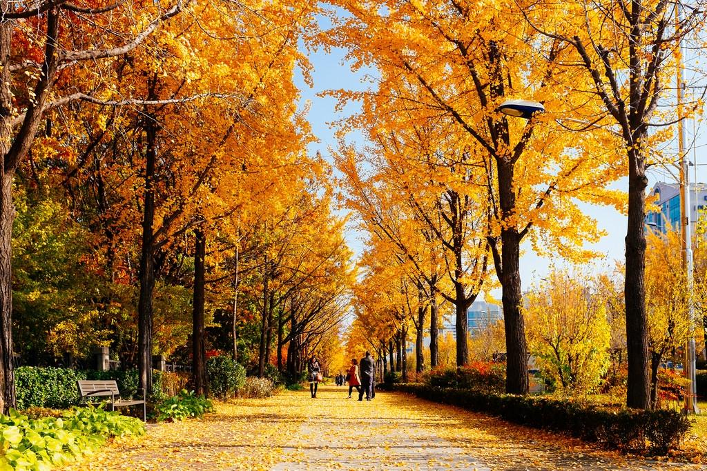 Tour Hàn Quốc Seoul-Nami-Everland (4N4Đ)