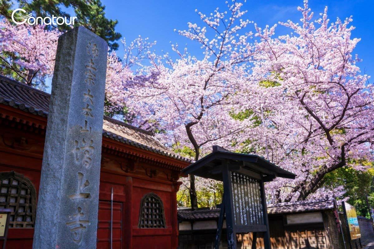 [Cung đường vàng] Tour du lịch Nhật Bản : Tokyo - Osaka - Kobe - Nagoya - Yamanashi ( 6N5Đ)